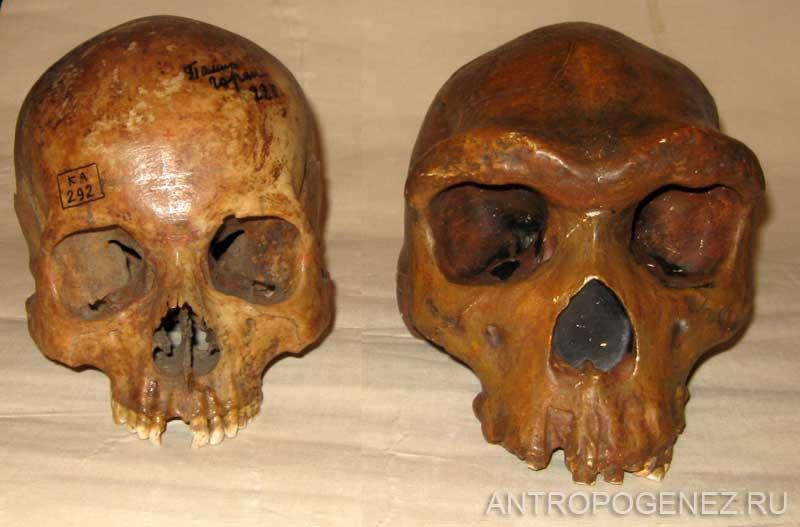 форма черепа еврея фото великой