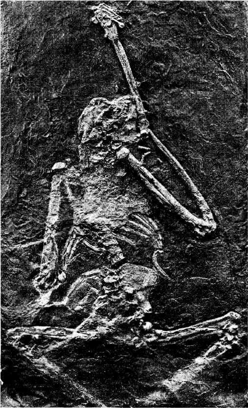 Картинки по запросу Ореопитек, фото ореопитек