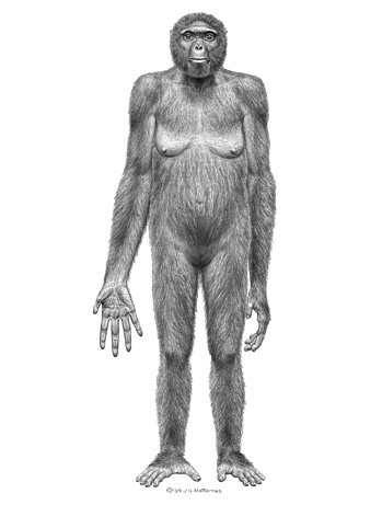 Ardipithecus ramidus     Источник: Tim D. White et al. Ardipithecus ramidus and the Paleobiology of Early Hominids     http://www.sciencemag.org/cgi/     content/full/326/5949/64/DC2
