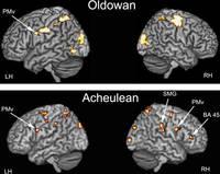 """Участки мозга, в которых при помощи позитронно-эмиссионной томографии (ПЭТ) была зарегистрирована повышенная активность в процессе изготовления олдувайских (вверху) и ашельских (внизу) орудий. LH — левое полушарие, RH — правое полушарие, PMv — вентральная премоторная кора, SMG — надкраевая извилина, BA 45 — поле Бродмана 45.       Источник: Aldo Faisal, Dietrich Stout, Jan Apel, Bruce Bradley. The Manipulative Complexity of Lower Paleolithic Stone Toolmaking // PLoS ONE. 2010. 5(11): e13718.       Популярное переложение: <a href=""""http://elementy.ru/news?newsid=431460"""">Элементы.РУ</a>"""