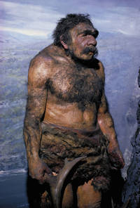Homo neanderthalensis