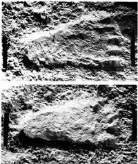Следы «пигмеев» из Бамбари             Источник: Marquer P. Note sur deux empreintes de pieds humains trouvées dans la République Centre-Africaine // Journal de la Société des Africanistes, 1960, T.30, №1, pp.7-14.