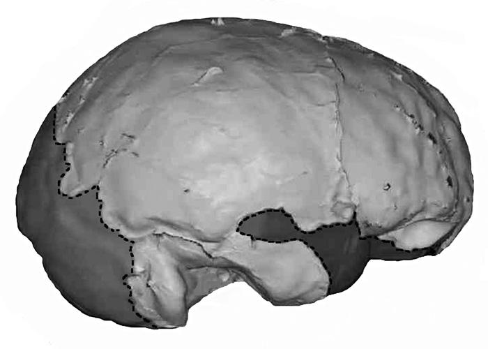 ris28_gibraltar2_brain.jpg