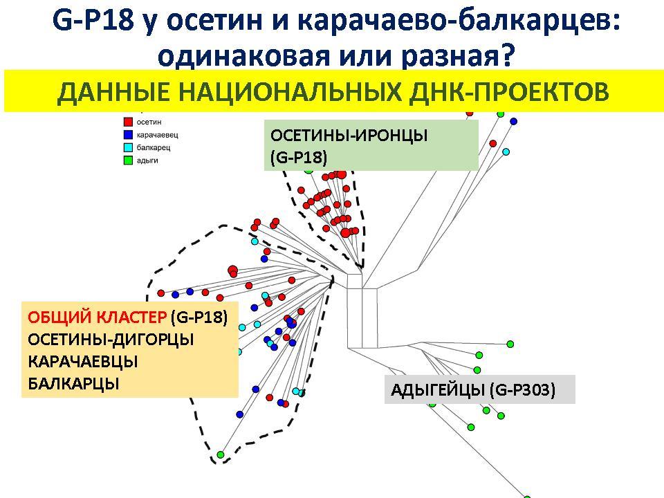Днк балкарцев, днк генеалогия балкарцев