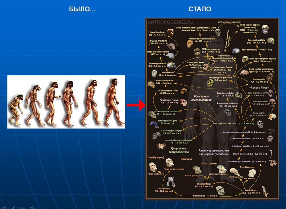 схемы эволюции человека.