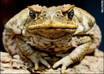 Кролики, жабы и другие чудовища в Австралии - Антропогенез.РУ