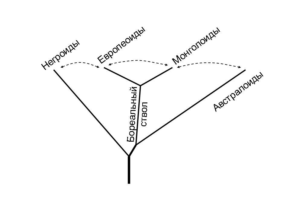 Европеоиды, монголоиды, австралоиды: стадиальность или метисация ...