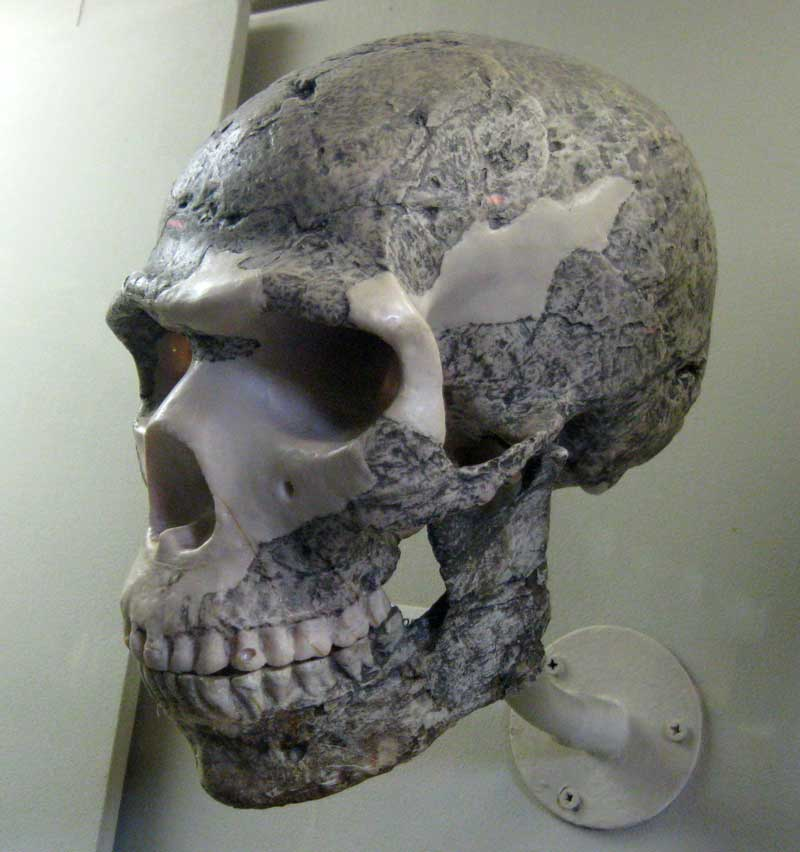 http://antropogenez.ru/uploads/tx_fossils/skhul5_.jpg